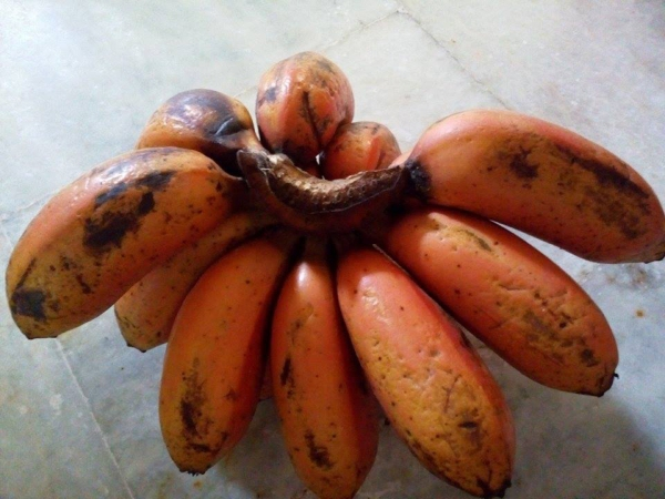 Red_banana_From_Tamil_Nadu